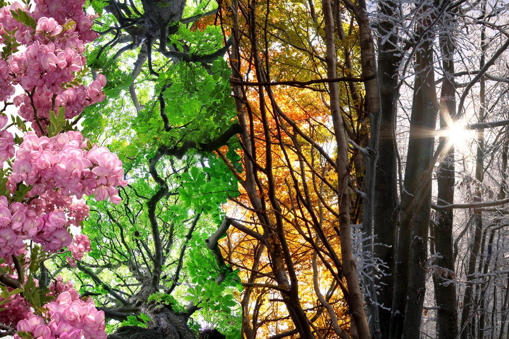 Image of nature highlighting seasonal changes.
